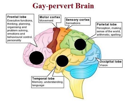 homosexual born gay or learned behavior essay